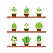 pic of pot plant  - Pot Plants Gardening Isolated On White Background Vector Illustration - JPG