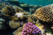 stock photo of sky diving  - red sea coral reef with hard corals fishes and sunny sky shining through clean water  - JPG