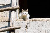 stock photo of domestic cat  - Cat outdoor portrait - JPG