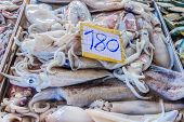 picture of squid  - Fresh squid Produce at the Market in Krabi Town Thailand - JPG