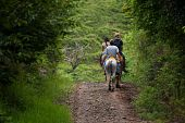 picture of vaquero  - Tourists on horseback in Costa Rican cloud forest - JPG