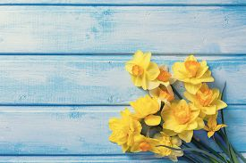 pic of daffodils  - Bright yellow daffodils flowers on blue painted wooden planks - JPG