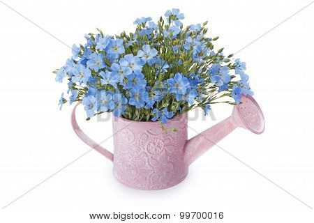 Blue Flax Blossoms