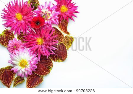 Flowers On White Backdrop