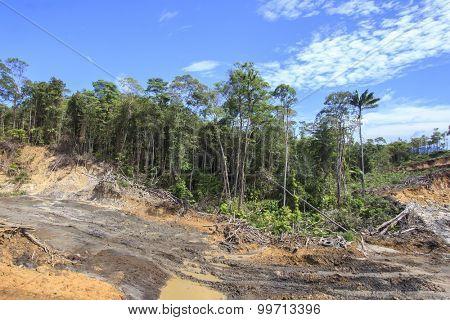 Deforestation environment damage logging climate change
