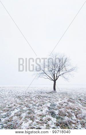 Lonely frozen tree