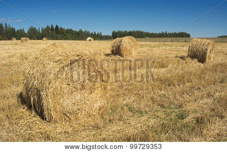 Field With Haystacks And Green Trees