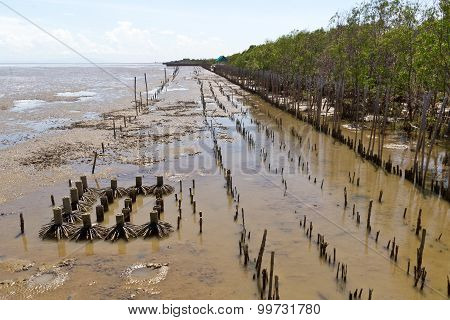 Mangrove Forests Along The Sea At Low Tide.