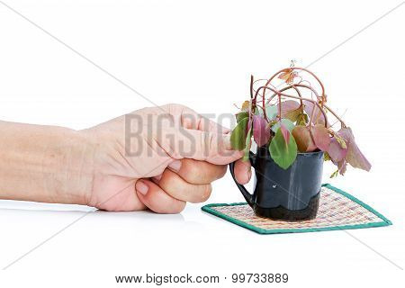 The Old Man's Hand And Cup Of Growing Tree Environment Concept.