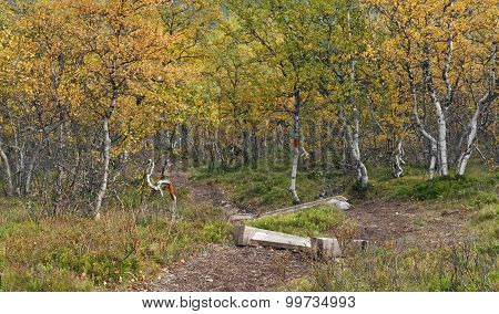 View of a trail, path through the tundra forest.