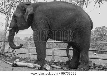 Elephant Lonely