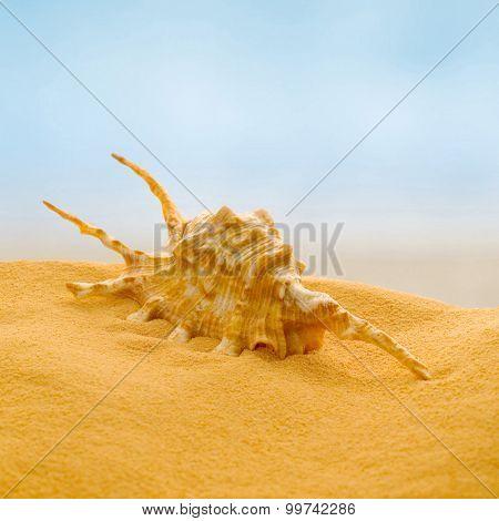 Sea shell on the beach.