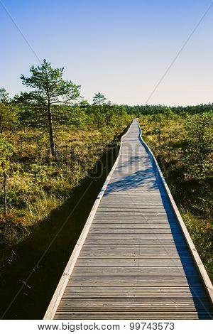 Wooden path on a Viru swamp in Estonia