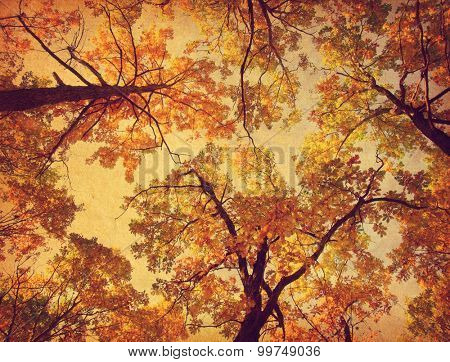 Autumn Trees ( Oak) on the sky background. Photo in retro style. Added paper texture. Toned image.
