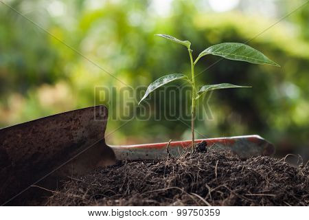 Young Plant Growing On Brown Soil With Shovel