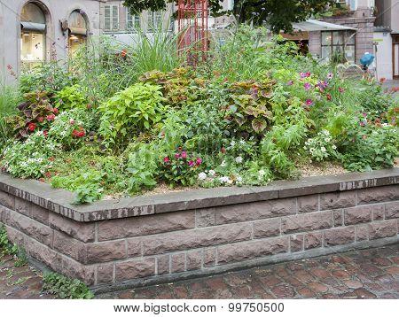 Plants In Colmar