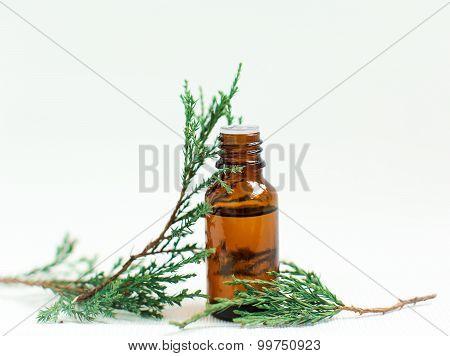 Essential Pine Oil