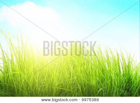 Grama verde Prado em dia ensolarado