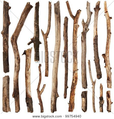 Tree Branches Set