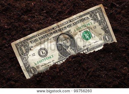 One Dollar On Soil Background