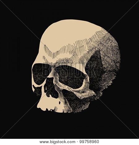 White skull in grunge design style. JPEG version.
