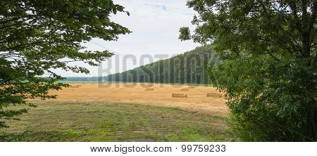 Packs Of Straw On A Golden Stubble Field
