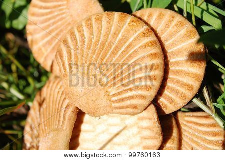 sugar cookies in the shape of seashells