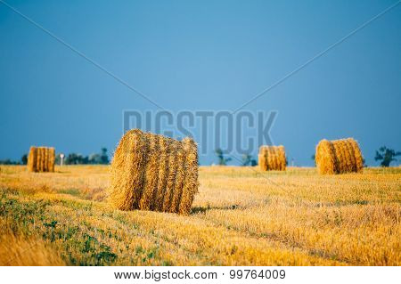 Summer Autumn Rural Landscape Field Meadow With Hay Bales After