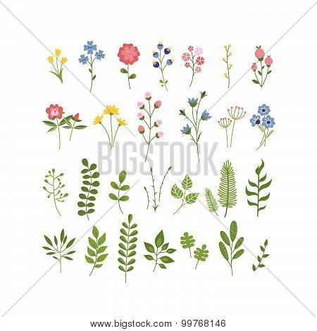 Floral Hand Drawn Herbarium Collection