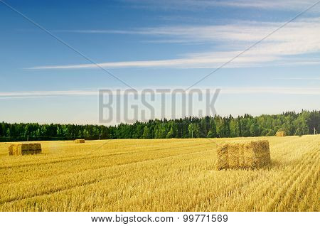 Wheat Field with stacks of hay and blue sky with clouds