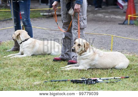 Blind People With Their Guide Dogs