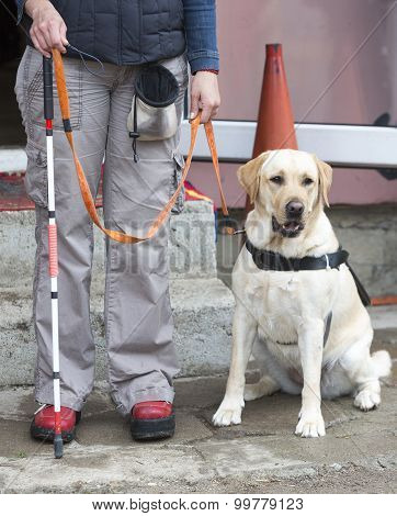 Blind Person With Her Guide Dog