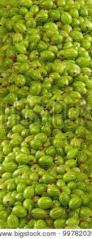 Image Of Delicious Gooseberries Closeup