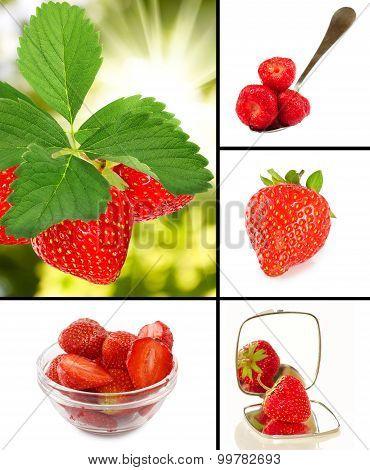 Image Of Many Strawberries Closeup