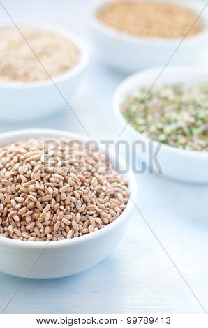 Cereal Grains , Barley , Soybean , Rice , Millet , Spelled