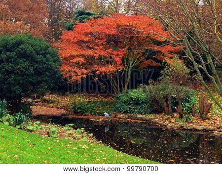 Autumn Scene With Red Foliage In Hyde Park