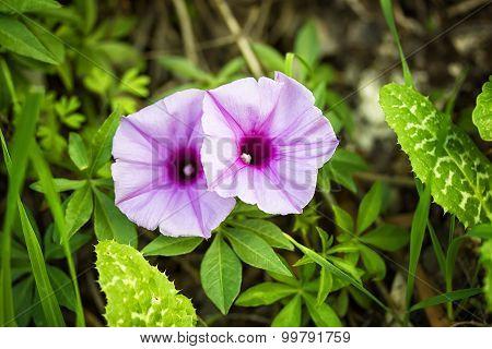 Spring flowers in Israel