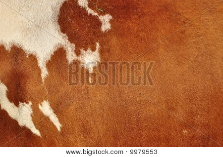 Skin of a cow.