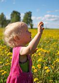 Summer Dandelions poster