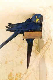 picture of polly  - Blue parrot hid from the heat Portrait - JPG