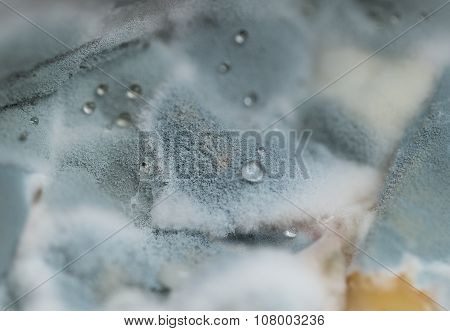 Macro view of blue mold with water drops on it