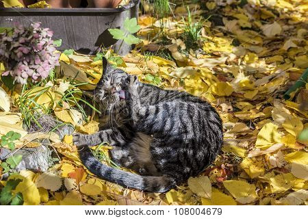 Cat Enjoys The Warm Light In Autumn On A Leave Bed