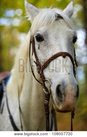 Beautiful White Horse In The Forest