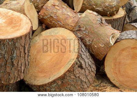 Heap Of Sawn Pine Logs
