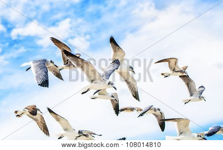 White sea gulls flying in the blue sunny sky.