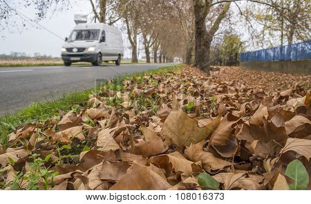Autumn Roadside