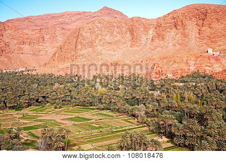 In   Gorge Morocco  And  Village