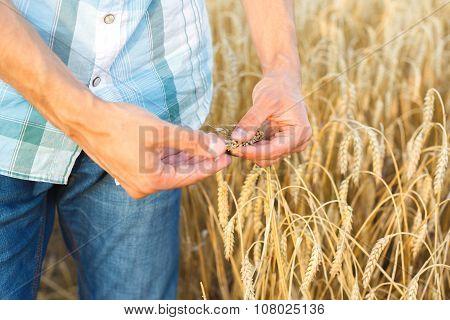 Man Hand Touching Wheat