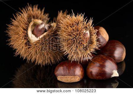 Chestnuts On A Black Reflective Background