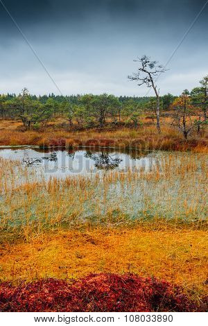 Swamp Kakerdaja in Estonia at the autumn